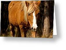 Wild Pony Greeting Card