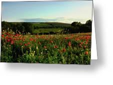 Wild Poppies Growing In A Field, Wylye Greeting Card