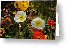 Wild Poppies Greeting Card by Helen Carson