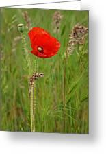 Wild Poppy Greeting Card
