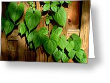 Wild Potato Vine 2 Greeting Card
