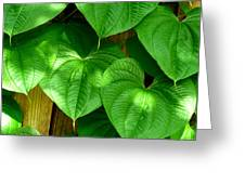 Wild Potato Vine Greeting Card