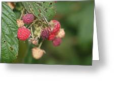 Wild Raspberrys Greeting Card
