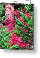 Wild Red Maple Greeting Card
