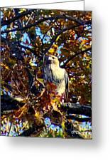 Wild Red Tail Hawk Greeting Card