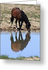 Wild Reflection Greeting Card