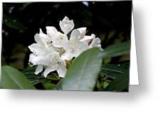 Wild Rhododendron Blossom Greeting Card