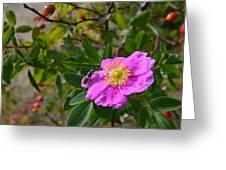 Wild Rose 3 Greeting Card