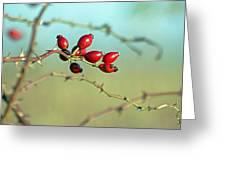 Wild Rose Hips Greeting Card