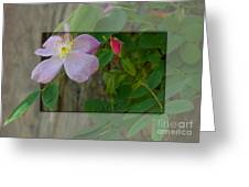 Wild Rose Out Of Bounds 1 Greeting Card
