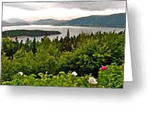 Wild Roses At Photographer's Point Overlooking Bonne Bay In Gros Morne Np-nl Greeting Card