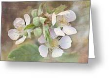 Wild Roses - Digital Paint Greeting Card