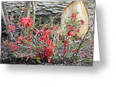 Wild Roses In Wood Greeting Card