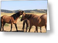 Wild Spanish Stallion In Charge Greeting Card