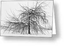 Wild Springtime Winter Tree Black And White Greeting Card by James BO  Insogna