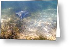 Wild Sting Ray Greeting Card