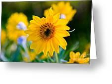 Wild Sunflower Greeting Card by Chris Heitstuman