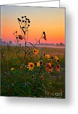 Wild Sunflowers At Dawn Greeting Card