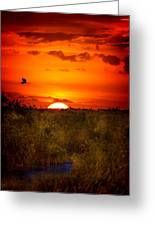 Wild Sunset Greeting Card