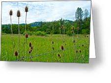 Wild Teasel In Nez Perce National Historical Park-id- Greeting Card