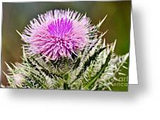 Wild Thistle  Greeting Card