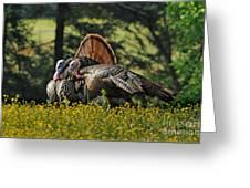 Wild Turkey 2 Greeting Card