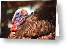 Wild Turkey 2013 Greeting Card