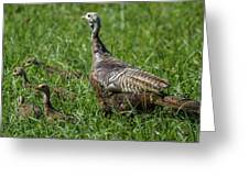 Wild Turkey And Poults Greeting Card
