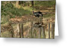 Wild Turkey Crossing Greeting Card