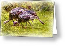 Wild Turkey Hens Greeting Card by Barry Jones
