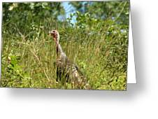 Wild Turkey In The Sun Greeting Card