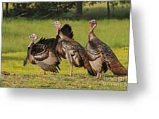 Wild Turkey Trio Greeting Card