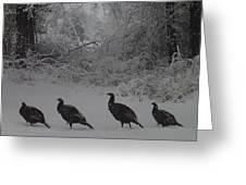 Wild Turkey Winter Greeting Card