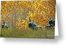 Wild Turkeys And Fall Colors Greeting Card