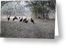 Wild Turkeys II Greeting Card