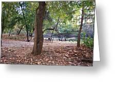 Wild Turkeys In Camp Greeting Card