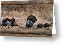 Wild Turkeys Greeting Card by Lori Deiter