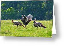 Wild Turkeys Greeting Card
