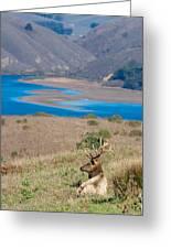 Wild Wapiti Surveying His Kingdom Greeting Card
