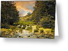 Wild Wetlands Greeting Card