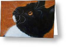 Wild Whiskers Greeting Card