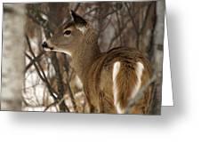 Wild White-tailed Deer Greeting Card