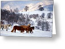 Wild Winter  Greeting Card