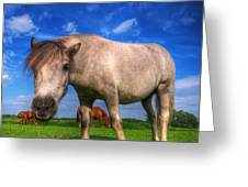 Wild Young Horse On The Field Greeting Card
