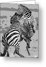 Wild Zebras Greeting Card