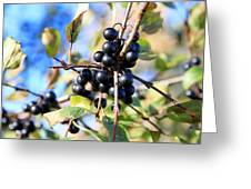 Wildberry Plant Greeting Card