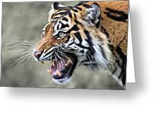 Wildcat II Greeting Card