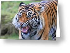 Wildcat IIi Greeting Card
