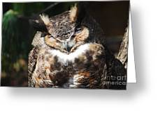Wilderness Owl Greeting Card