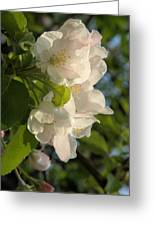 Wildf Apple Blossoms Greeting Card